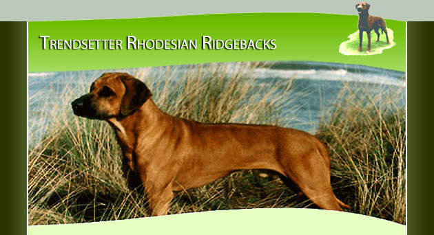 Rhodesian Ridgeback puppies for sale from Trendsetter Stud